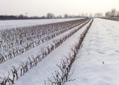 vivai-viticolo-trentini-4